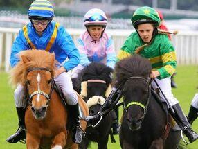 Shetland pony racing